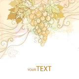 Vintage card with bunch of grape, grape leaves and dotted curls  Royalty Free Stock Photos