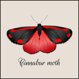 Vintage card with butterfly. Minimal flat vector illustration. Cinnabar moth. Lettering handwriting calligraphy. Vintage or retro Royalty Free Stock Photo