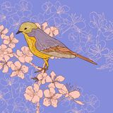 Vintage card with cherry blossoms and bird Royalty Free Stock Image