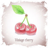 Vintage card with cherry. Royalty Free Stock Images