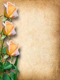 Vintage card for congratulations with yellow roses Royalty Free Stock Images