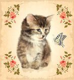Vintage card with fluffy kitten and butterfly.  Imitation of wat. Ercolor painting Stock Photography