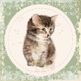 Vintage card with fluffy kitten. Royalty Free Stock Image
