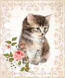 Vintage card with fluffy kitten and rose. Stock Photo