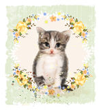 Vintage card with fluffy kitten and roses. Stock Image