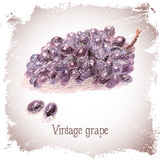 Vintage card with grape. Stock Photo