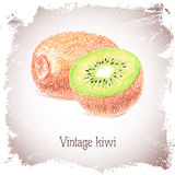 Vintage card with kiwi. Royalty Free Stock Photography