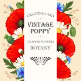 Vintage card with meadow flowers Royalty Free Stock Images