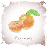Vintage card with orange. Royalty Free Stock Photo