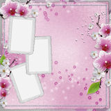 Vintage card with orchid Royalty Free Stock Images