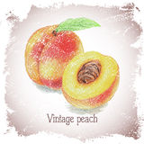 Vintage card with peach. Stock Photo