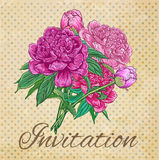 Vintage  card with peonies Stock Image