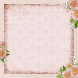 Vintage card and pink mallow Stock Photography