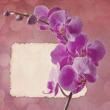 Vintage card with pink orchid Royalty Free Stock Images