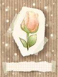 Vintage card with rose vector illustration