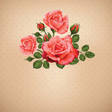 Vintage Card with Roses Vector Design Element. Stock Photography
