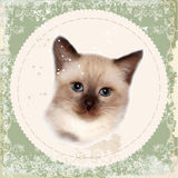Vintage card with thai kitten. Royalty Free Stock Image