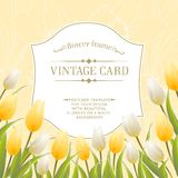 Vintage card with tulips. Vector illustration Stock Photo