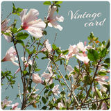 Vintage card on unfocused floral background Royalty Free Stock Images