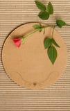 Vintage cardboar with rose. Vintage cardboar with red rose Royalty Free Stock Photos