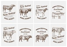 Vintage cards. Farm cattle bulls and cows. Different breeds of domestic animals. set of posters. Engraved hand drawn royalty free illustration