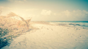Vintage caribbean beach Royalty Free Stock Photography
