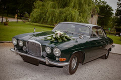 Vintage cars for wedding. Old luxury car for newlyweds royalty free stock photo