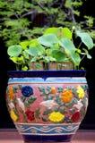 Vintage Ceramic Flowerpot. The closeup of vintage ceramic flowerpot Stock Photos