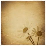 Vintage chamomile flowers background. Stock Image