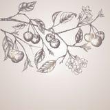 Vintage cherry background stock illustration