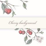 Vintage cherry background royalty free illustration