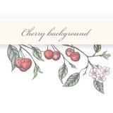 Vintage cherry background Royalty Free Stock Photos