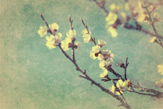 Vintage cherry blossom Royalty Free Stock Photos