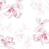 Vintage Cherry Blossom Flower Background Royalty Free Stock Image