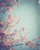 Vintage cherry blossom Stock Photos