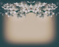 Vintage cherry blossoms background Royalty Free Stock Photo