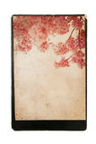 Vintage Cherry Blossoms Royalty Free Stock Photos