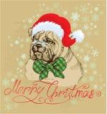 Vintage Christmas card - bulldog wearing Santa Cla Royalty Free Stock Images