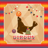 Vintage circus card with eared seal Stock Image