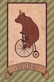 Vintage circus illustration, bear Royalty Free Stock Photos