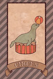 Vintage circus illustration, seal Royalty Free Stock Photo