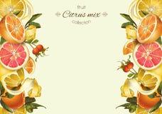 Free Vintage Citrus Banner Royalty Free Stock Image - 72826416