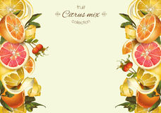 Vintage citrus banner. Vector vintage citrus banner with lemon, hibiscus and rose hip.Design for tea, juice, natural cosmetics, baking,candy and sweets with royalty free illustration
