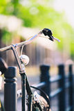 Vintage city bike colorful retro light and handlebar Stock Photography