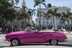 American classic car in Havana with smart driver, Cuba. Pink american classic car in the street of Havana, Cuba Royalty Free Stock Photo