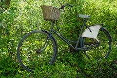 Vintage classical Bicycle against a tree Stock Photos