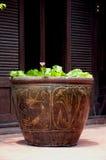 Vintage Clay Flowerpot. photos libres de droits