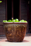 Vintage Clay Flowerpot. The closeup of vintage cly flowerpot Royalty Free Stock Photos