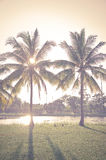 Vintage coconut palm in the park Stock Photo