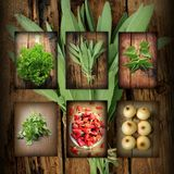 Vintage collage of fresh herbs Stock Image
